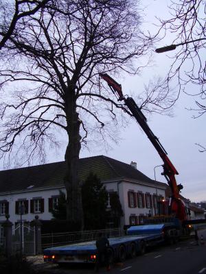 Gratis bomen kappen limburg